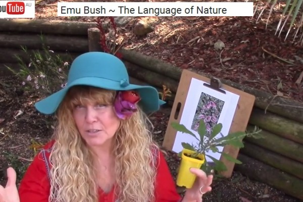 The meaning of Australian Wildflowers - Emu Bush